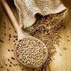 grano-saraceno
